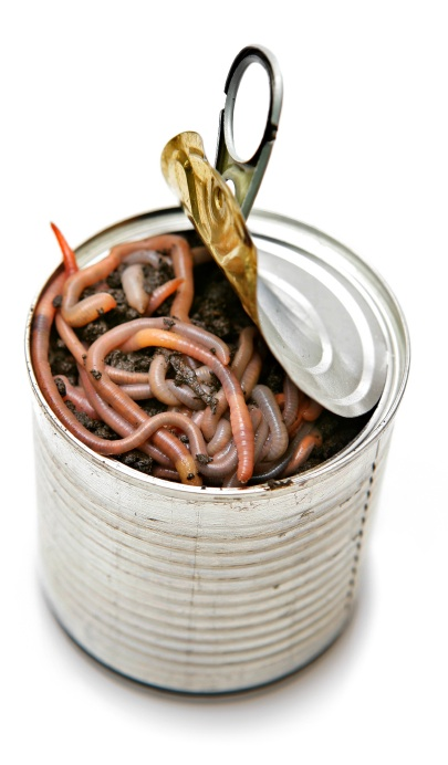 Click image for larger version  Name:can-of-worms.jpg Views:64 Size:72.6 KB ID:12315